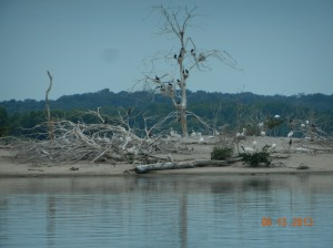 Egrets, cormorants, and white pelican on island in pool 14 above Clinton