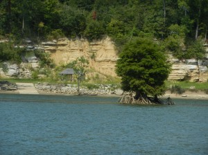 Cliffs and cypress tree